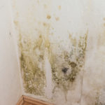 Mold Removal Long Beach Island, Mold Removal LBI, Mold Damage Long Beach Island