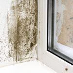 mold cleanup lbi, mold removal lbi